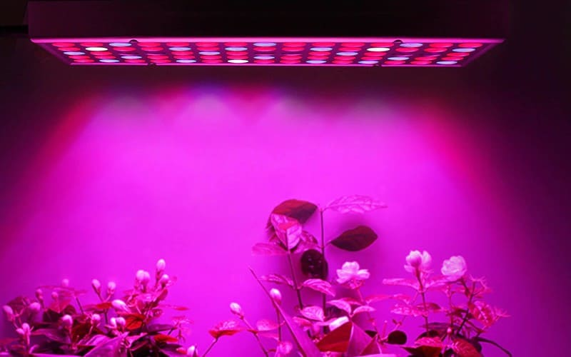 Guide to Indoor Aquaponics Grow Lights