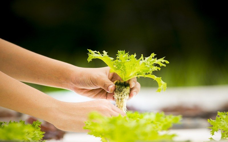 Aquaponics FAQs for Beginners