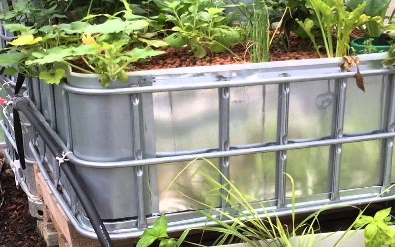 How to Choose the Right Aquaponics Grow Bed
