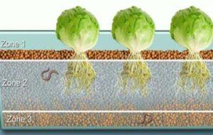 Aquaponics Grow Bed Zone