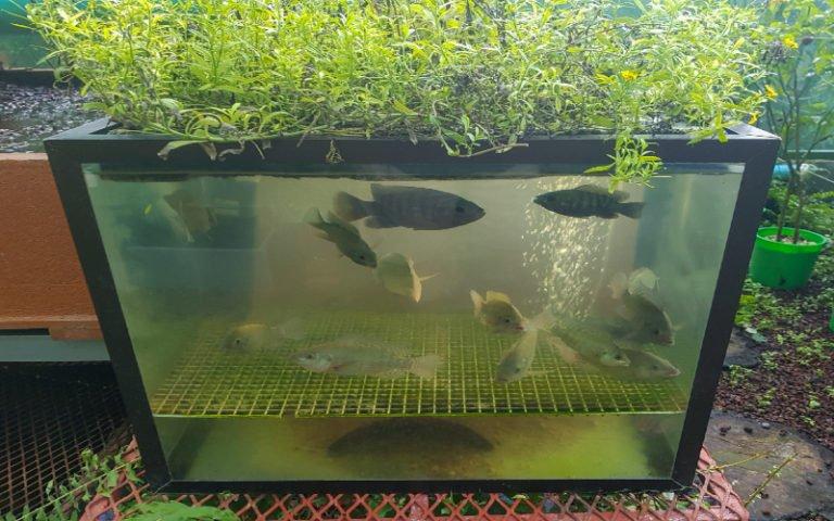 DIY Aquaponics System