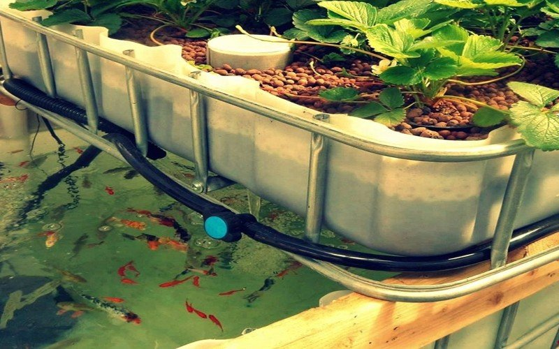 Flood and Drain Aquaponics System